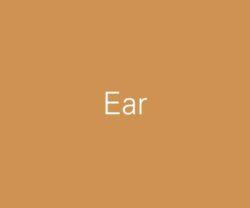 sub-cat-ear-600x500