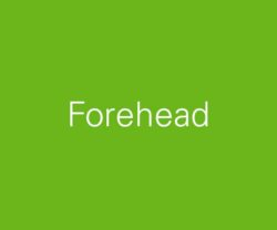 sub-cat-forehead-600x500